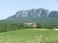 Bosco di Ficuzza  - Ficuzza (2280 clic)