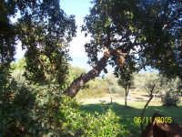 Escursioni tra i boschi  - Caronia (7061 clic)