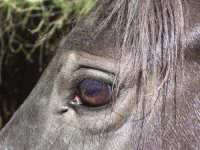occhio da cavallo  - Brolo (7589 clic)