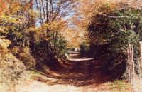 Bosco autunnale  - Alcara li fusi (4087 clic)