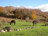 Autunno nel Parco dei Nebrodi  - Longi (5963 clic)