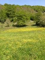 Parco dei nebrodi  x altre foto visita il sito www.robertopatroniti.it  - Nebrodi (6343 clic)