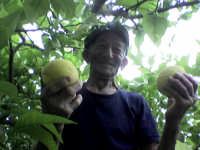 U zu' Vicenzu, e i suoi limoni !!!  - Sant'agata di militello (5700 clic)