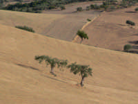 campo  - Frigintini (4225 clic)