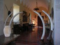 S.Maria del Bosco.La stanza dei trofei di caccia.  - Contessa entellina (6294 clic)