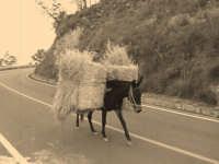 Cavaliere in autostrada.  - Giuliana (3651 clic)