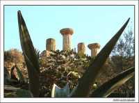 Colonne del tempio di Ercole ed agave  - Agrigento (4489 clic)