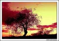 Tramonto ... surreale  - Agrigento (2492 clic)