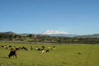 prateria di Catenanuova con vista Monte Etna innevato  - Catenanuova (2356 clic)