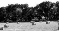 dopo la raccolta del fieno  - Siracusa (4421 clic)