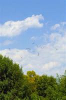 uccelli  - Siracusa (4419 clic)