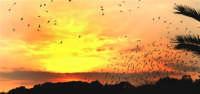 uccelli al tramonto  - Brucoli (6214 clic)