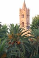 Palme e torre della cattedrale -Palermo, 14.7.2006  - Palermo (1368 clic)