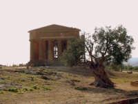 tempio della concordia   - Agrigento (1805 clic)