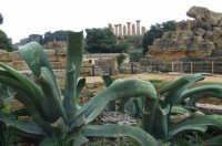valle dei templi   - Agrigento (2228 clic)