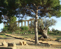 valle dei templi   - Agrigento (2339 clic)