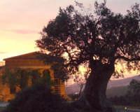Tempio della Concordia   - Agrigento (1825 clic)