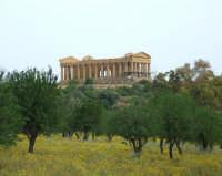 tempio della concordia  - Agrigento (1896 clic)