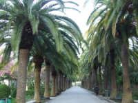 Giardini Iblei  - Ragusa (3135 clic)