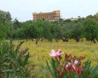 tempio della concordia  - Agrigento (2091 clic)