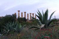 tempio di ercole  - Agrigento (1993 clic)