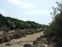 Acropoli di Selinunte   - Castelvetrano (5043 clic)