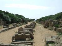 Acropoli di selinunte   - Castelvetrano (5127 clic)