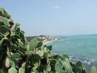 La spiaggia   - Marinella di selinunte (4037 clic)