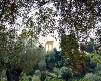Tempio di Dioscuri   - Agrigento (2064 clic)