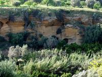 Valle dei Templi   - Agrigento (3169 clic)