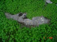 Bosco Magaggiaro  - Santa margherita di belice (4495 clic)