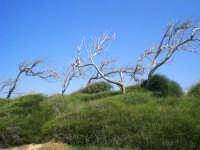 Trekking Marino... paradiso (tossico) vicino al petrolchimico...(gelesi vi siete venduti l'anima)  - Gela (2360 clic)