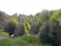 Trekking Marino... paradiso (tossico) vicino al petrolchimico...(gelesi vi siete venduti l'anima)  - Gela (2939 clic)