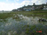 La spiaggia dopo un acquazzone  - Porto palo di menfi (2783 clic)