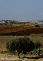 Panoramica C.da Pantano Secco a Ispica (RG).  - Ispica (1910 clic)