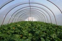 Zucchino in Tunnel.  - Ispica (2980 clic)