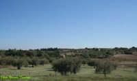 Panoramica Strada Prov. Ispica Pachino.  - Ispica (1656 clic)