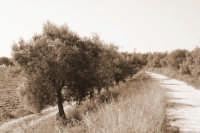 Ispica strada di Campagna C.da Valle Rotonda.  - Ispica (1714 clic)