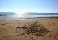 La spiaggia di Santa Maria del Focallo a Ispica (RG).  - Ispica (2316 clic)