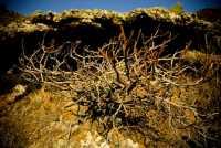 particolare campestre  - Linosa (3607 clic)