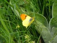 i colori della natura  - Fondachelli fantina (5747 clic)