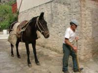U zu peppe  - San mauro castelverde (2970 clic)