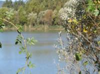 Veduta lago Gurrida  - Randazzo (2427 clic)