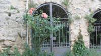 Palazzo Pollicarini, rose nel cortile  - Enna (4406 clic)