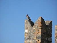 sembra dire Sono il re del mondo  - Taormina (2919 clic)