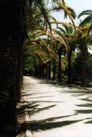 Ragusa Ibla, i giardini pubblici RAGUSA Paola Bertoncini