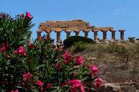 Parco Archeologico Selinunte (633 clic)