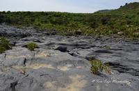 Gole del Simeto Gole del Simeto, formate, come quelle dell'Alcàntara, da una colata di lava i cui enormi massi di basalto sono stati levigati dall'acqua. In questa foto l'acqua scorre all'interno dell'insenatura che si intravede al centro della lava.  - Bronte (1745 clic)