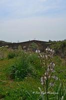 Ponte Saraceno Di origine romana, questo ponte, i cui archi a sesto acuto sono ornati da una fascia di pietra bicroma, è stato ricostruito sotto Ruggero II. Costeggiando il fiume (il Simeto) verso Nord, potrete scoprire le gole del Simeto, formate, come quelle dell'Alcàntara, da una colata di lava i cui enormi massi di basalto sono stati levigati dall'acqua.  - Bronte (1448 clic)