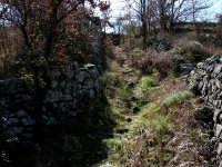 A mulattera Vecchia strada di campagna MULATTIERA  - Linguaglossa (2513 clic)